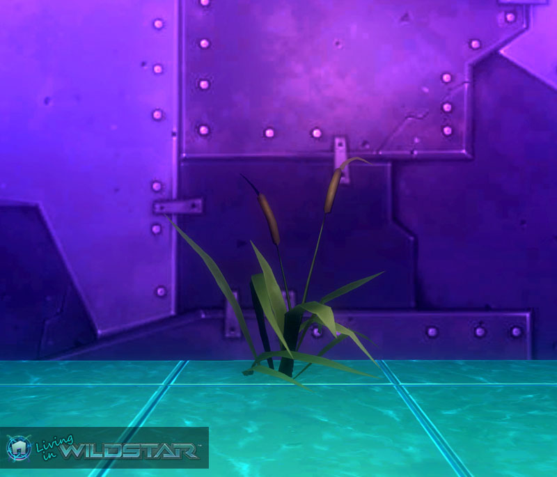 Wildstar Housing - Cattails
